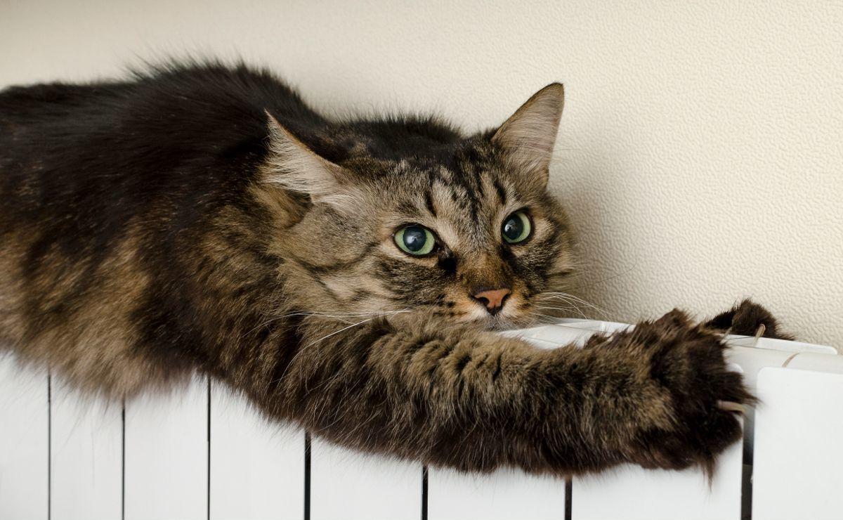 Тюнинг альфы своими руками фото